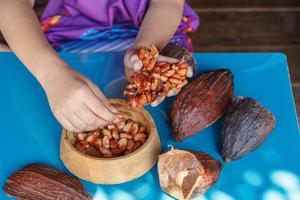 inspeccionar los granos de cacao para clasificarlos foto