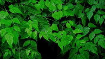 feuilles vertes humides avec des gouttelettes d'eau et de la rosée flottant sous la pluie. video