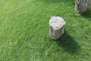 Cut tree on green grass field. Stump background with copy space photo