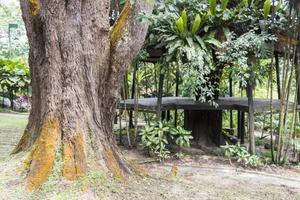 gran árbol tropical con hermoso musgo amarillo en la corteza. foto