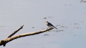 vit hakfågel som vilar på en gren video