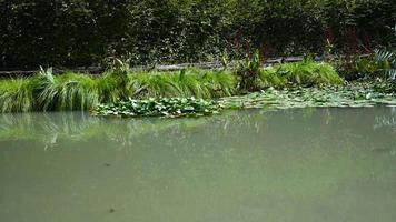 liten sjö vid kaskaden av marmore på sommaren video