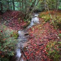 Running water stream in forest during autumn time photo