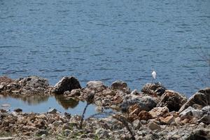 White Egret Standing On a Rock Beside Water photo