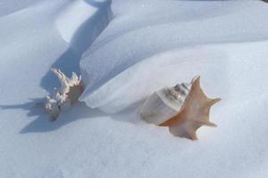 Tropical sea shell covered with snow photo