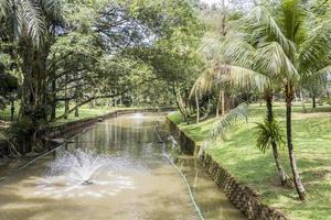 estanque tropical o río con palmeras jardín botánico de perdana. foto