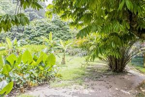 Forest and park Perdana Botanical Gardens in Kuala Lumpur, Malaysia. photo