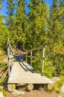 pequeño puente de madera y sendero sobre el río hemsedal noruega. foto