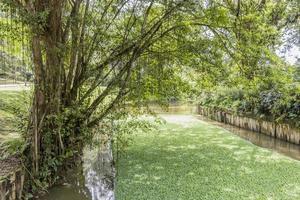 estanque o rio con agua plantas acuaticas perdana botanical garden. foto