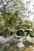 Oasis Garden in Perdana Botanical Gardens in Kuala Lumpur, Malaysia. photo