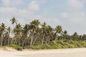 Benaulim Beach with palms around in Benaulim, Goa, India photo