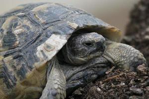 una tortuga en la ciudad foto