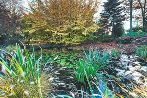 Autumn colors in a garden with a pond photo