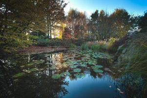 Garden with pond in autumn colors photo