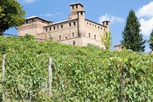 Vineyard in Piedmont Region, Italy, with Grinzane Cavour photo