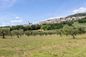 Olive trees in Assisi village in Umbria region, Italy. photo