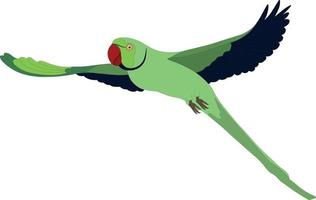 Green parrot Indian ring-necked parakeet flying vector illustration