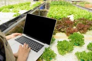 Closeup hydroponic female farmer hand collecting vegetable growth data photo