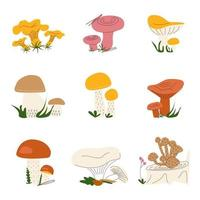A set of different wild mushrooms vector