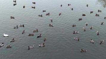 ankor flyter på sjön video