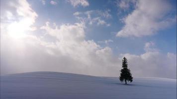 arbre de noël avec de la neige en hiver video