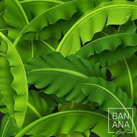 Banana Leaves Background, Green Tropical Leaf, Vector Illustration