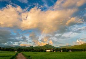 green fields in rainy season and blue sky rainbow over rice field photo