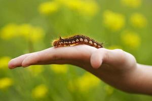 Brown caterpillar sitting on a hand photo