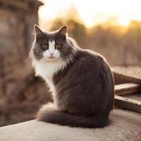 Gray cat sitting on the street photo