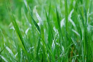 Grass with water drops on the surface photo