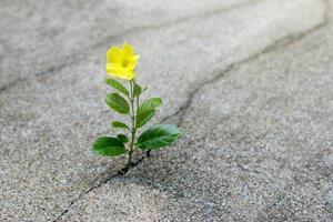 flor amarilla que crece en la calle crack, concepto de esperanza foto