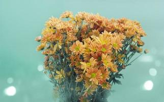 Pastel colorful tone old flowers on green background photo