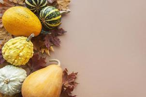 Fall background with multi color pumpkins photo