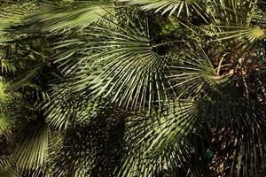 Tropical shrub with leaves in summer photo