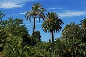 bosque tropical con palmeras altas foto