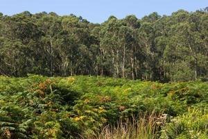 Vegetation in the region of Galicia, Spain photo