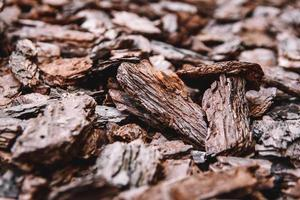 Background from coniferous tree bark pieces photo