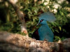 hermoso pájaro azul verdoso en el bosque foto