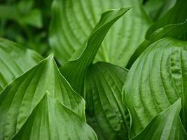 hermoso fondo de patrón de hoja verde grande foto