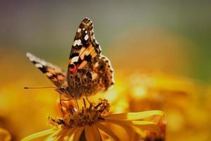 primer plano, de, un, marrón, mariposa, en, un, jardín, flor foto