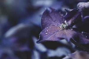 Close-up Of Purple Flower photo