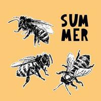 hand drawn bee sketch black honey vector illustration