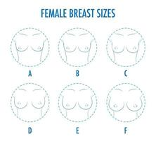 Set of contour round icons of different female breast size, body vector