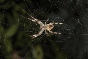 Spider waiting for prey photo