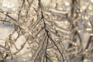 Natural background with ice crystals on plants photo