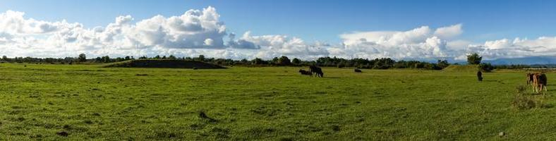 Natural panorama with green grass photo