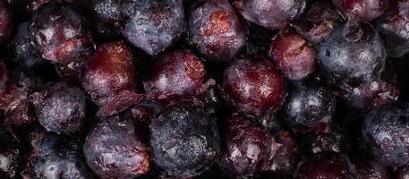 frozen dark blue vine grapes background close up photo