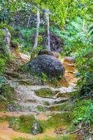 Ruta de senderismo en el bosque de selva tropical natural ilha grande brasil. foto