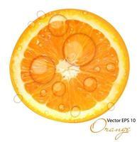 Ilustración de vector de fondo naranja jugoso fresco