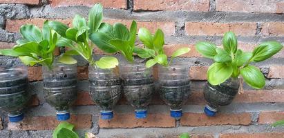 agricultura, verduras en la botella de plástico reciclado foto